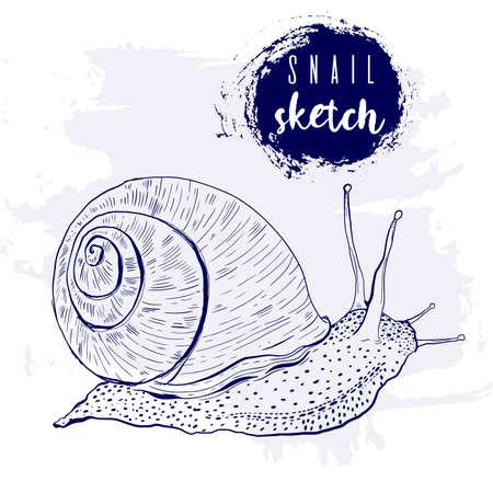 Vintage animal snail marine sketch.Retro line style.Hand drawn underwater