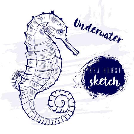 Vintage animal seahorse fish marine sketch.Retro line style.Hand drawn underwater.