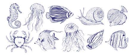 Collection marine animal fish.Sketch outline hand drawn.Crab,snail,seahorse,jellyfish and other. Illustration