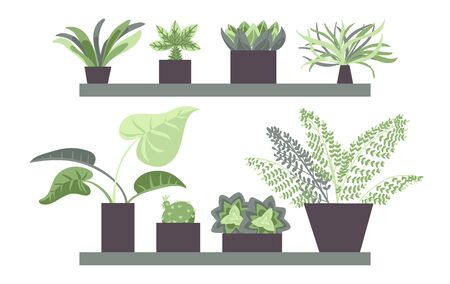 House plants in pots. Set of house indoor plants. Flower illustrations. Flat style vector.