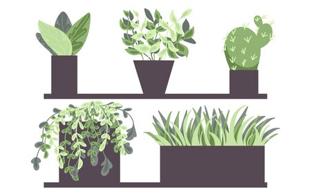 House plants in pots. Set of house indoor plants. Flower illustrations. Succulents and houseplants. Flat style vector.