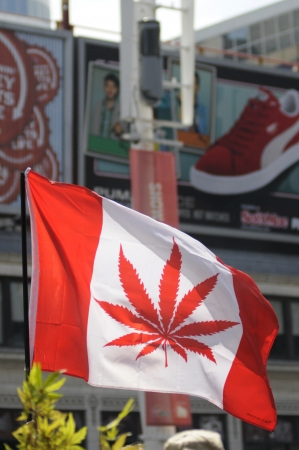 TORONTO - APRIL 20: Canadian flag replaced my marijuana plant instead of maple leaf during the annual marijuana 420 event at Yonge & Dundas Square on April 20 2012 in Toronto, Canada.