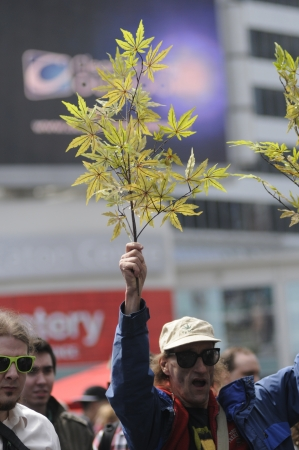 TORONTO - APRIL 20: An old man waiving a marijuana plant during the annual marijuana 420 event at Yonge & Dundas Square on April 20 2012 in Toronto, Canada.