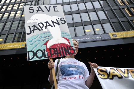 consulate: TORONTO-AUGUST 31: An activist in front of the Japan Consulate during a rally to protest the start of the annual dolphin hunt at Taiji,Japan on August 31, 2012 in Toronto, Canada.