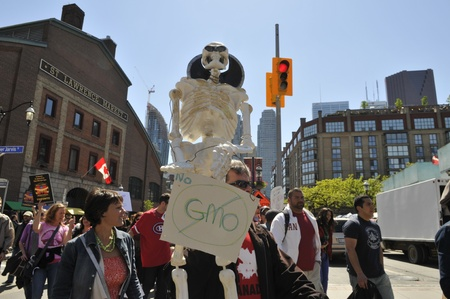modifying: A participant holding a fake skeleton as comparison for GMO products being as good as dying during a rally against GMO giant Monsanto on May 25, 2013 in Toronto, Canada. Editorial