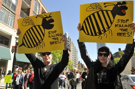 alleged: TORONTO-MAY 25:A couple holding banners asking to stop killing the bees, it is alleged that bees are dying due to the Genetically Modified Foods, during a rally on May 25, 2013 in Toronto, Canada.