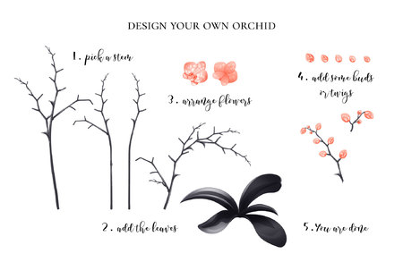 orchid plant creator: stems, leaves, flowers, buds, twigs; soft peach color; vector illustration; perfect for wedding invitations, clip arts or any other kind of designs Illustration