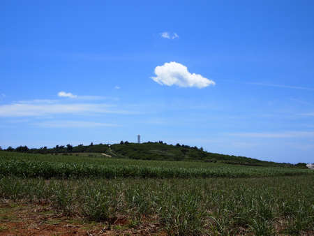 unexplored: The sugarcane fields in Kita-daito island (Okinawa, Japan)