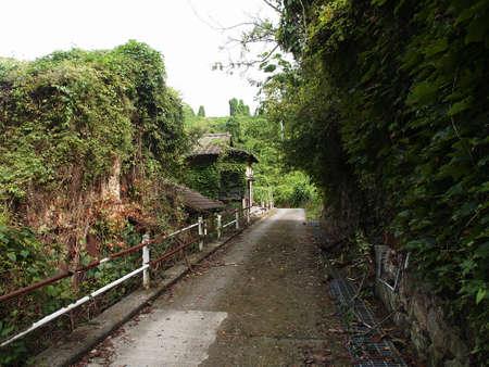 植物で覆われた放棄された村