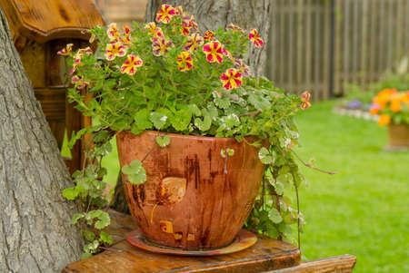 装飾的な鍋にペチュニア