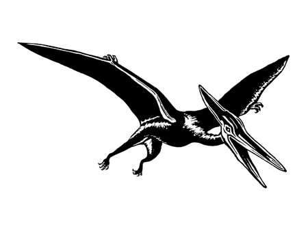 hand drawn, vector, sketch illustration of pterodactyl