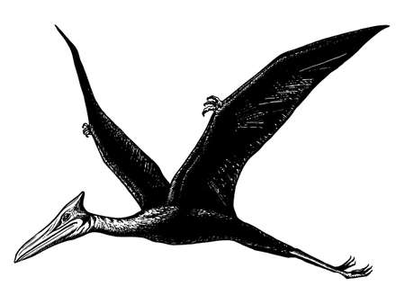 hand drawn, vector, sketch illustration of pterodactyl - Quetzalcoatl