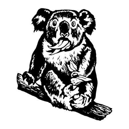 munching: hand drawn vector sketch silhouette linear illustration of koala munching leaves surprised koala