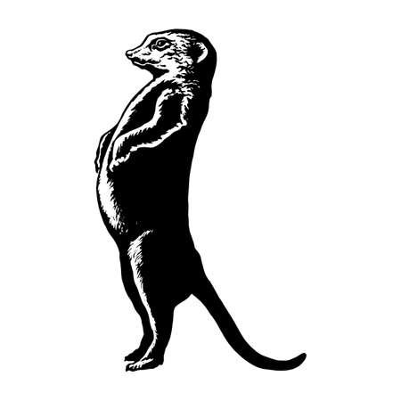 meerkat: hand drawn vector sketch silhouette linear illustration of plump or pregnant meerkat