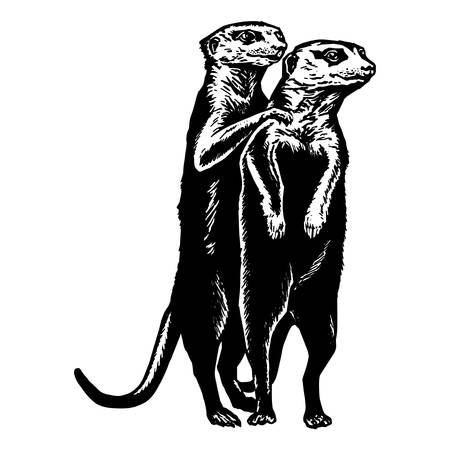 hand drawn vector sketch silhouette linear illustration of cuddling meerkats