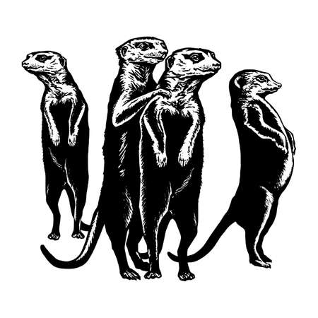 patrol: hand drawn vector sketch silhouette linear illustration of meerkats on patrol Illustration