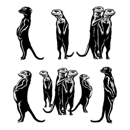 hand drawn vector sketch silhouette linear illustration of collection of drawings meerkats
