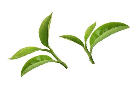 liści herbaty  Zdjęcie Seryjne