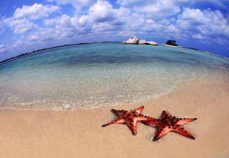 Couple of Starfish