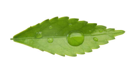 barium:   green leaf