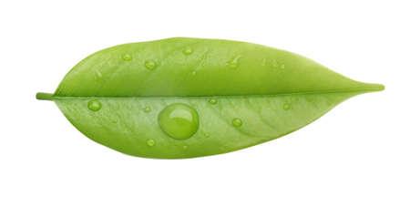 green  leaf Stock Photo - 6519952