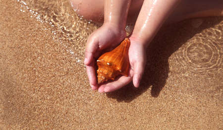 seashell in the hand photo