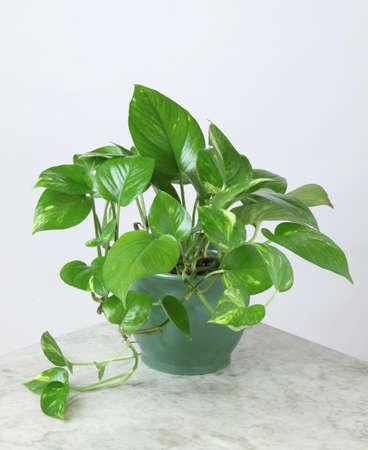 Ornamental Plants Stock Photo - 10573438