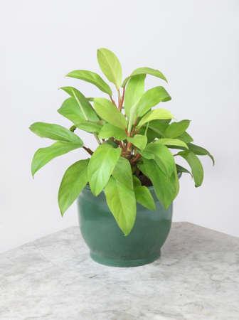Ornamental Plants Stock Photo - 10573545