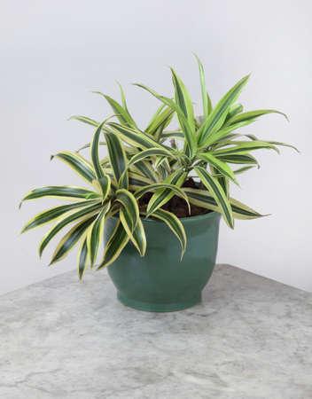 Ornamental Plants Stock Photo - 10573440