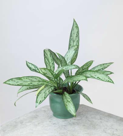 Ornamental Plants Stock Photo - 10587587