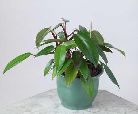 Ornamental Plants Stock Photo - 10587588