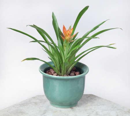 Ornamental Plants Stock Photo - 10587584