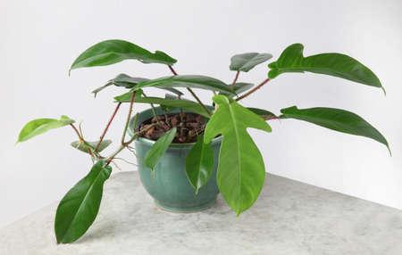 Ornamental Plants Stock Photo - 10587589