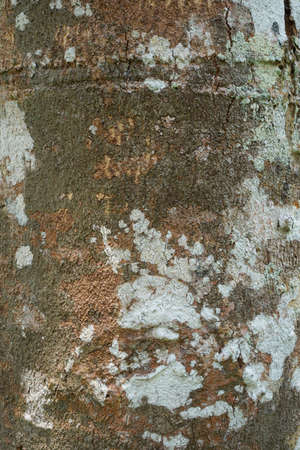 Wood texture background. trunk detail texture background. Bark tree texture wallpaper. Abstract background. Gnarl tree. Space for text in template. Empty concept.
