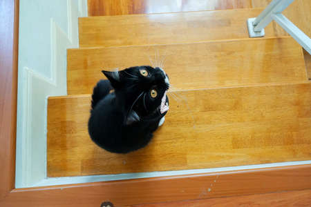 Cute black cat sits on the Staircase. Cat looking up at the camera.
