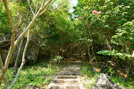 Travel Thailand - road in the woods in Khao Nang Phanthurat Forest Park at Cha am. road in the forest with sunshine. travel on natural concept. Up the Hill, Covered with trees. staircase