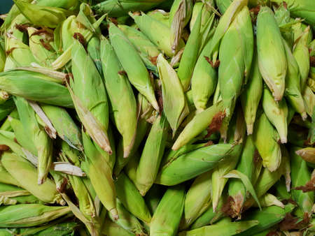 Top view of group corn as a background (Zea mays), on market in Thailand 写真素材