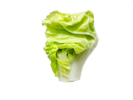 Fresh Chinese cabbage isolated on white background, for cooking or salads, healthy food concept