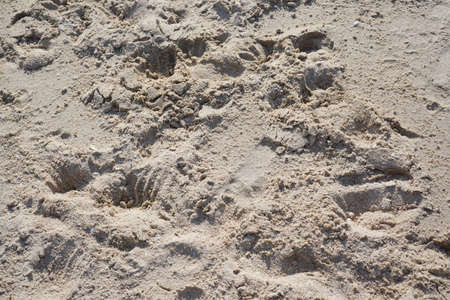 Abstract, Sand texture abstract background, Sandy beach for background, Top view, space for your text, Too soft Stockfoto