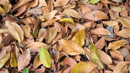 Abstract background, dry leaves on the ground in the forest, dead leaf texture, Natural brown wallpaper concept, Soft focus 스톡 콘텐츠