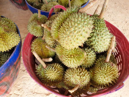 Top view of durian fruit in basket for sale in the market, Tropical fruit, copy space (Malvaceae, Durio, Bombacaceae, Phuang Mani), ready to eat 写真素材