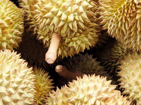 Top view of durian fruit as a background for sale in the market, Tropical fruit, copy space (Malvaceae, Durio, Bombacaceae, Phuang Mani), ready to eat 写真素材