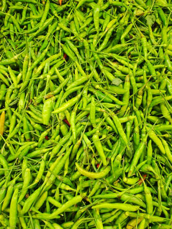 Top view of green pepper or chili as a background for sale in the market at Thailand, abstract background, use for cook, Vertical