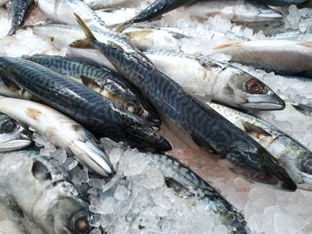 Top view of fresh mackerel or saba on ice for sale in the fish market at Thailand, seafood as a background (shot-bodied mackerel, Rastrelliger brachysoma, Ikan Temenung, Rumahan, Kembung Pelaling), re