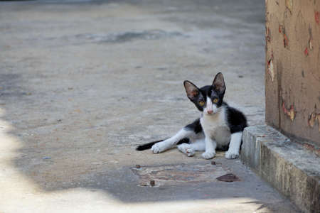 Homeless cat,  Cat of white mixed black color looking at camera are sitting on the floor in Thailand, Space for text in template Stock Photo