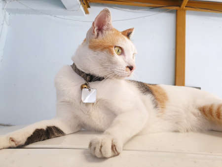 Selective focus of relaxed cat are sleeping on the floor laying in Thailand, Space for text in template, yellow cat