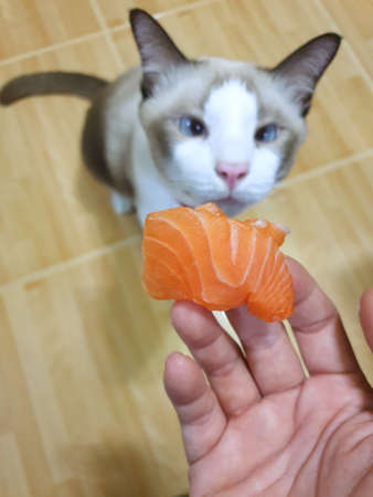 Selective focus of hand holding salmon on blurred cat as a background, Vertical Stock fotó