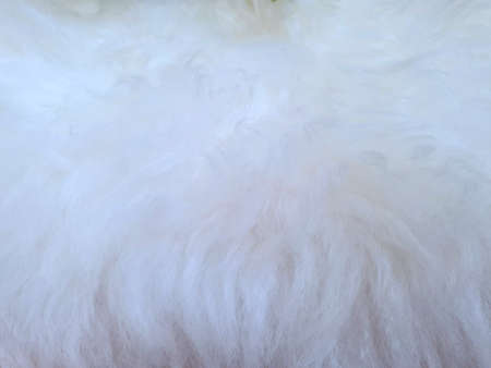 Abstract, Top view of cat fur texture, Fur background, soft hairy, Wool wallpaper concept Stock fotó
