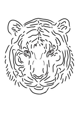 white tiger: Tiger draw in white background