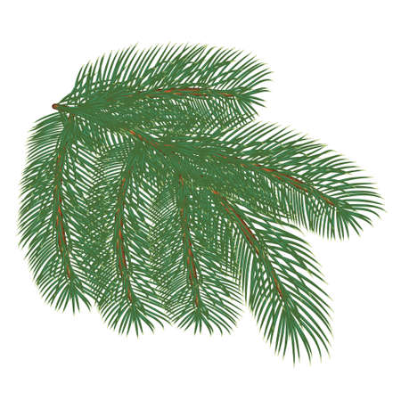 Spruce branch. Vector illustration, isolated on white background. Suitable for creating Christmas cards, New Year presentations, banners.